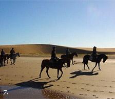 Horses on the beach in Jose Igancio, Uruguay