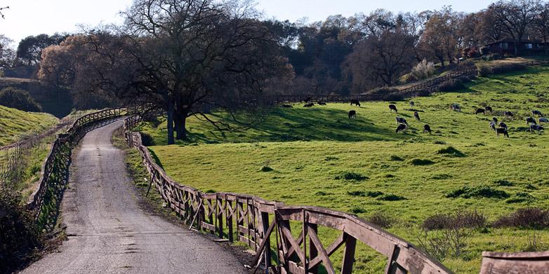 road两旁蜿蜒的木栅栏